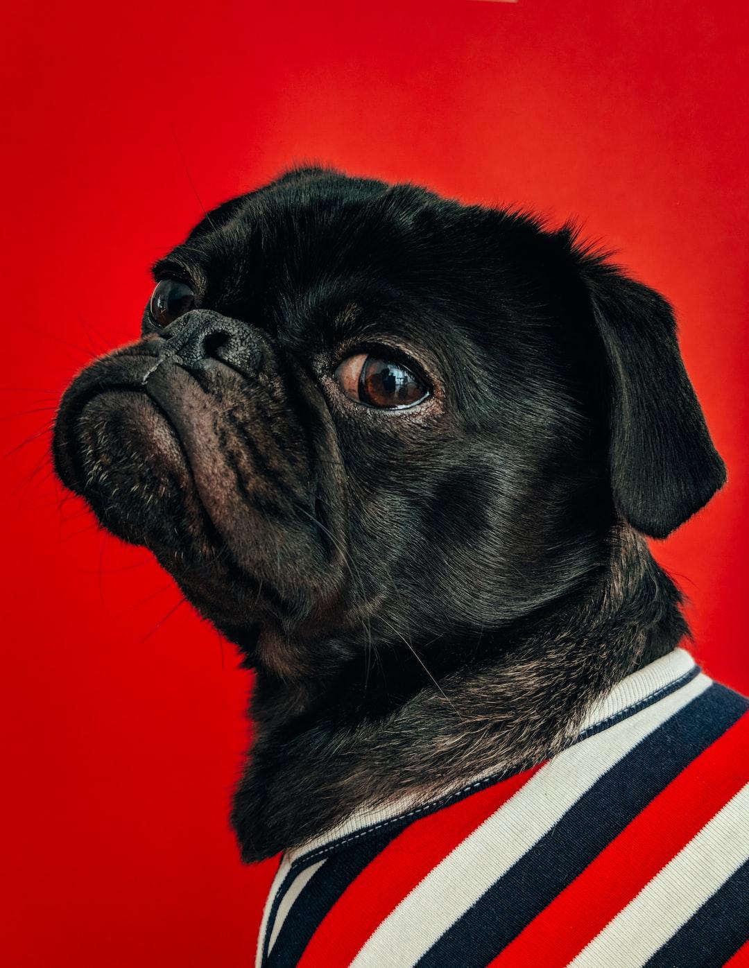 Doggy with style. (instagram.com/toshi.dog/)