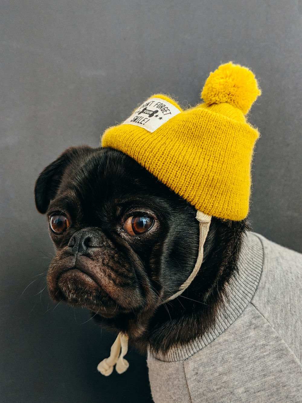 dog wearing shirt with hat