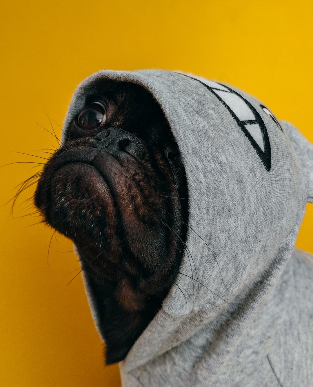 Doggy stajl foto