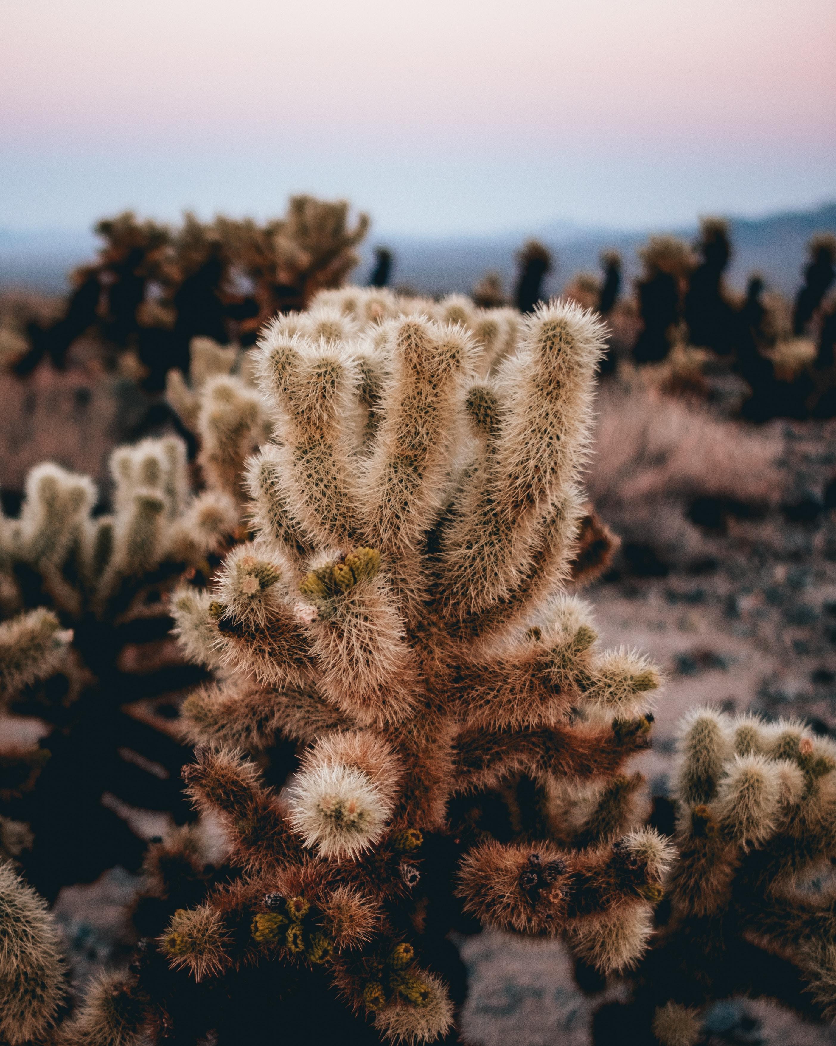 tilt shift lens photography of green cactus