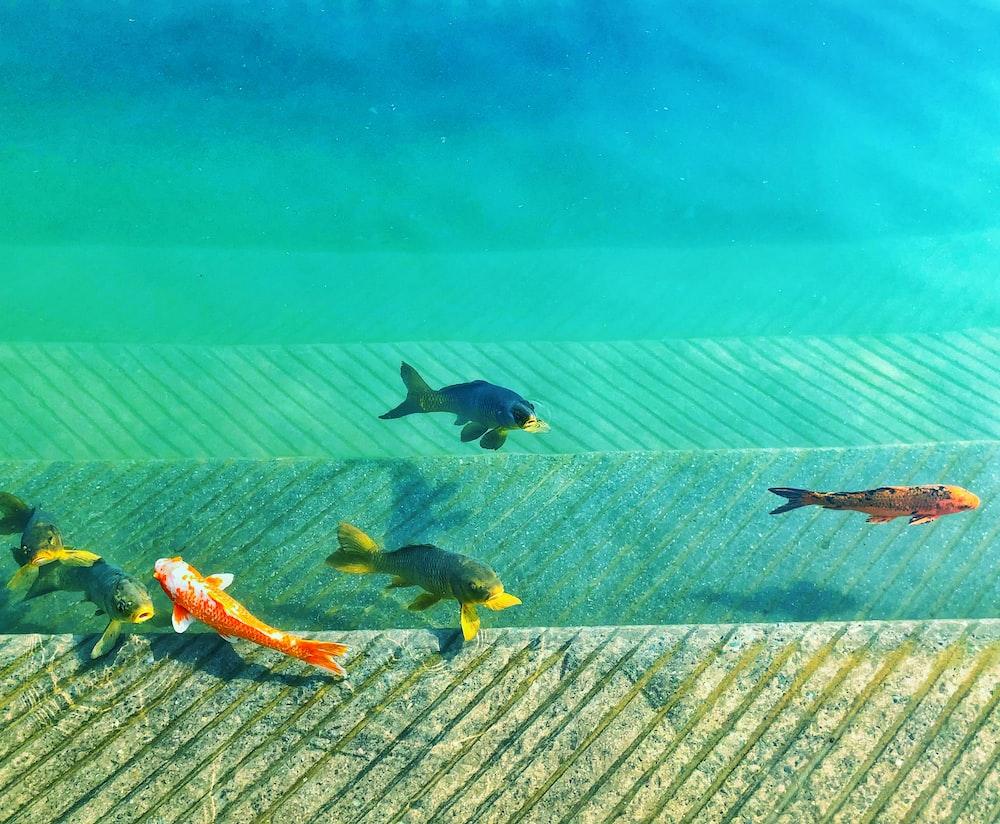 macro shot of six fishes