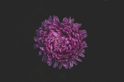 3968. Virágok