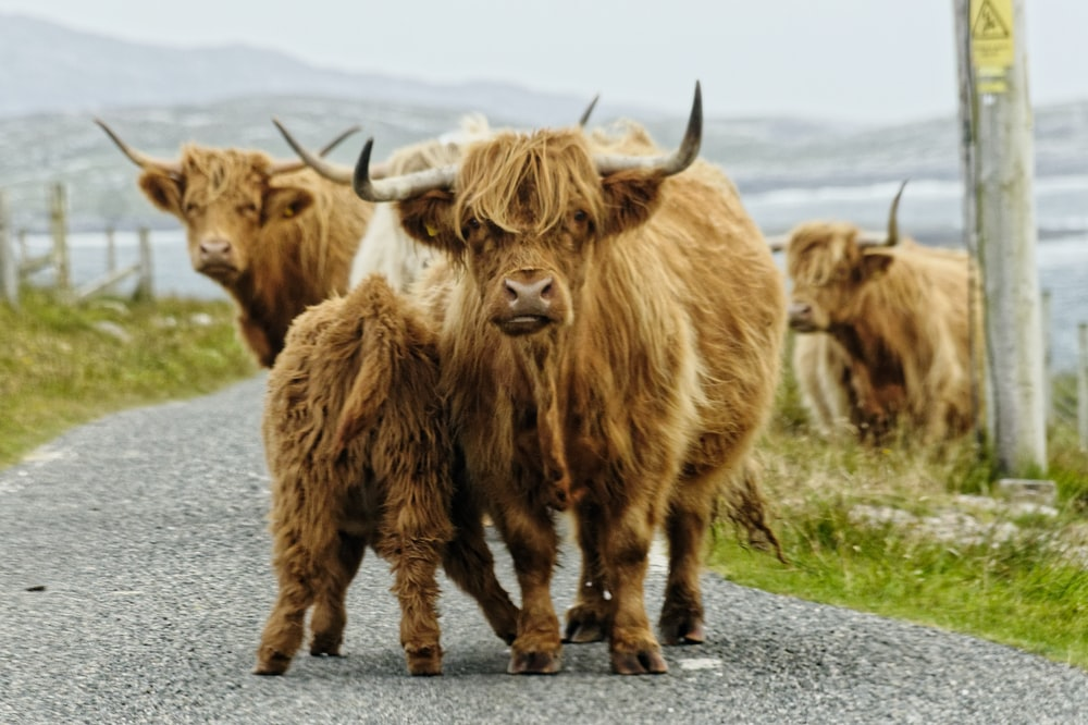 wildlife photography of four brown animals