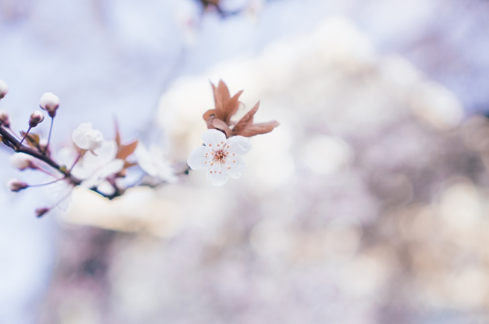 White blossom pictures download free images on unsplash 99 mightylinksfo
