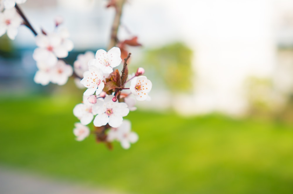 selective photography of white flowering tree
