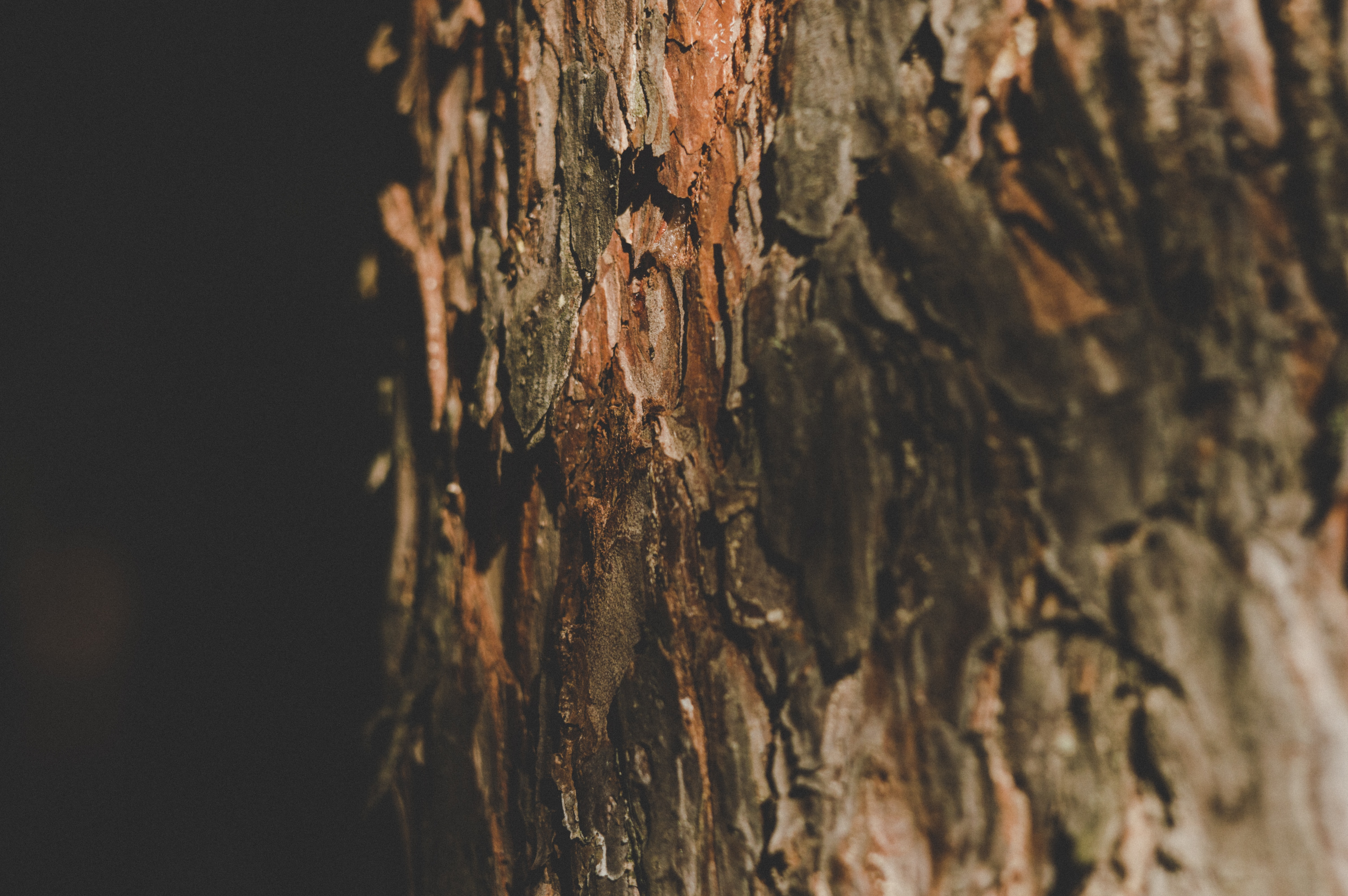 close-up photography of brown tree trunk