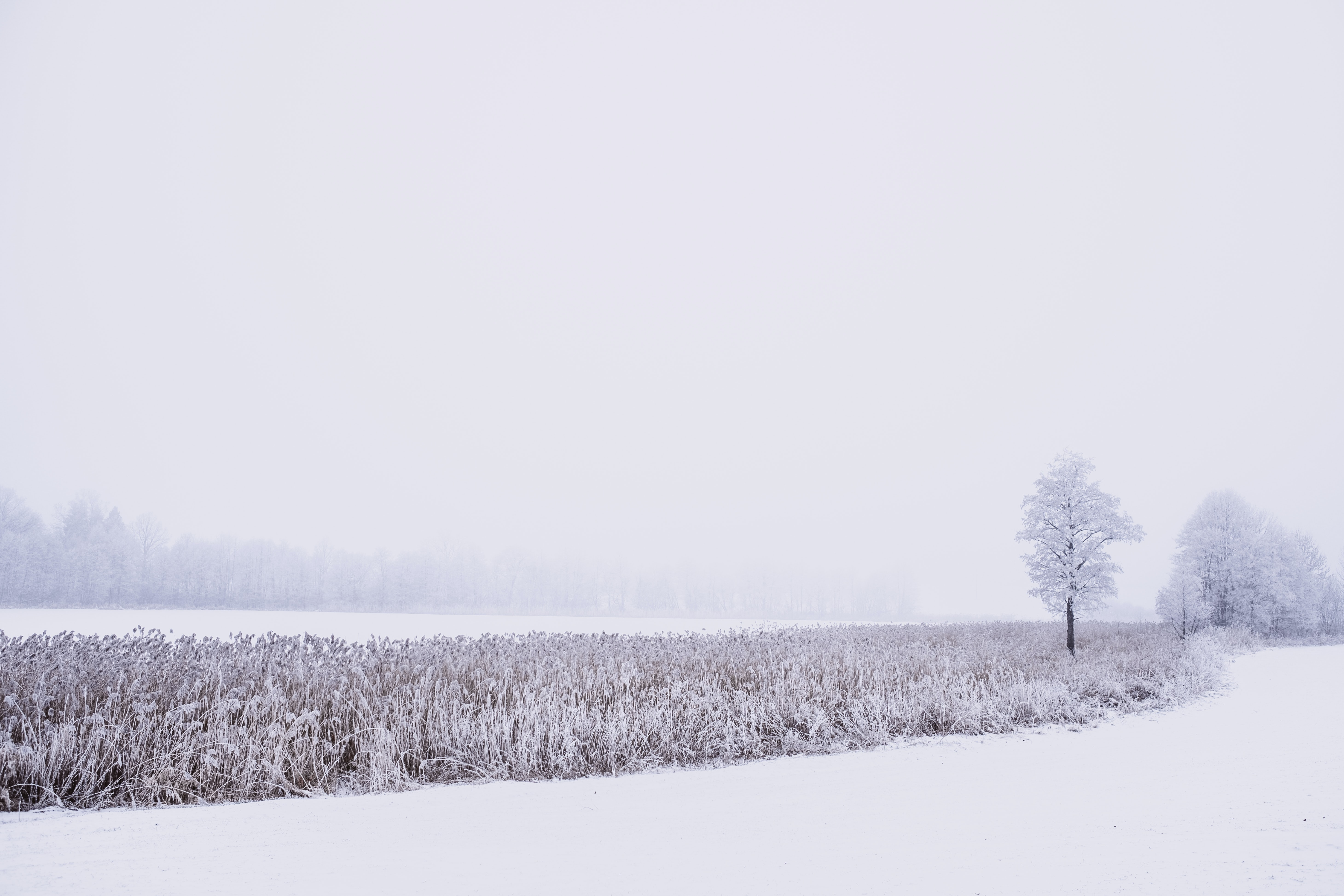 snow covered grass at daytime