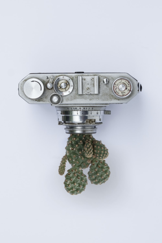 gray point-and-shoot camera near cactus