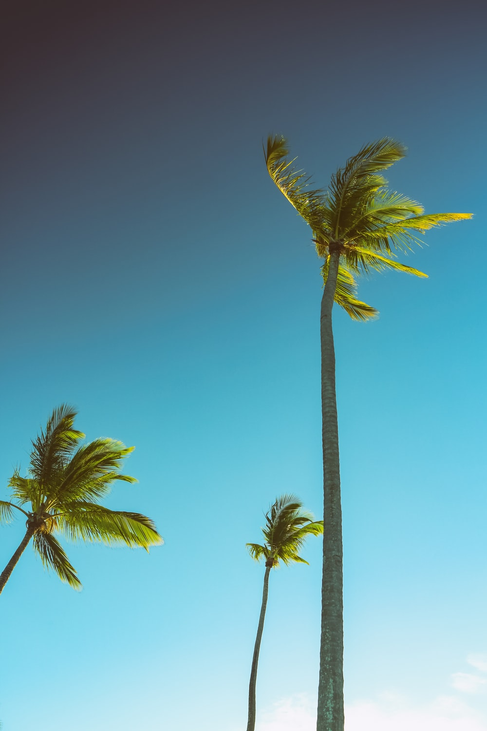 three green palm trees under blue sky