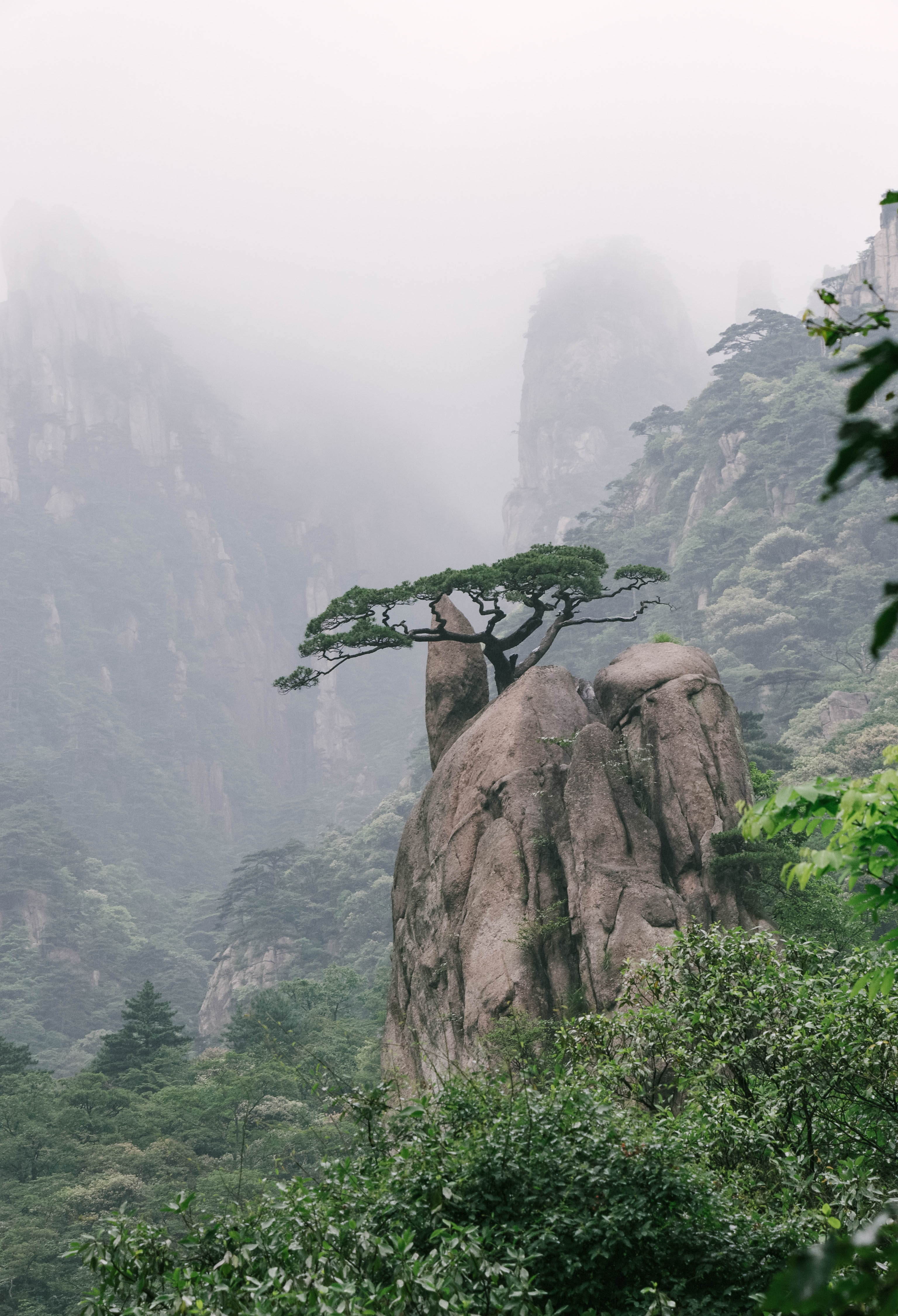 tree on rock formation