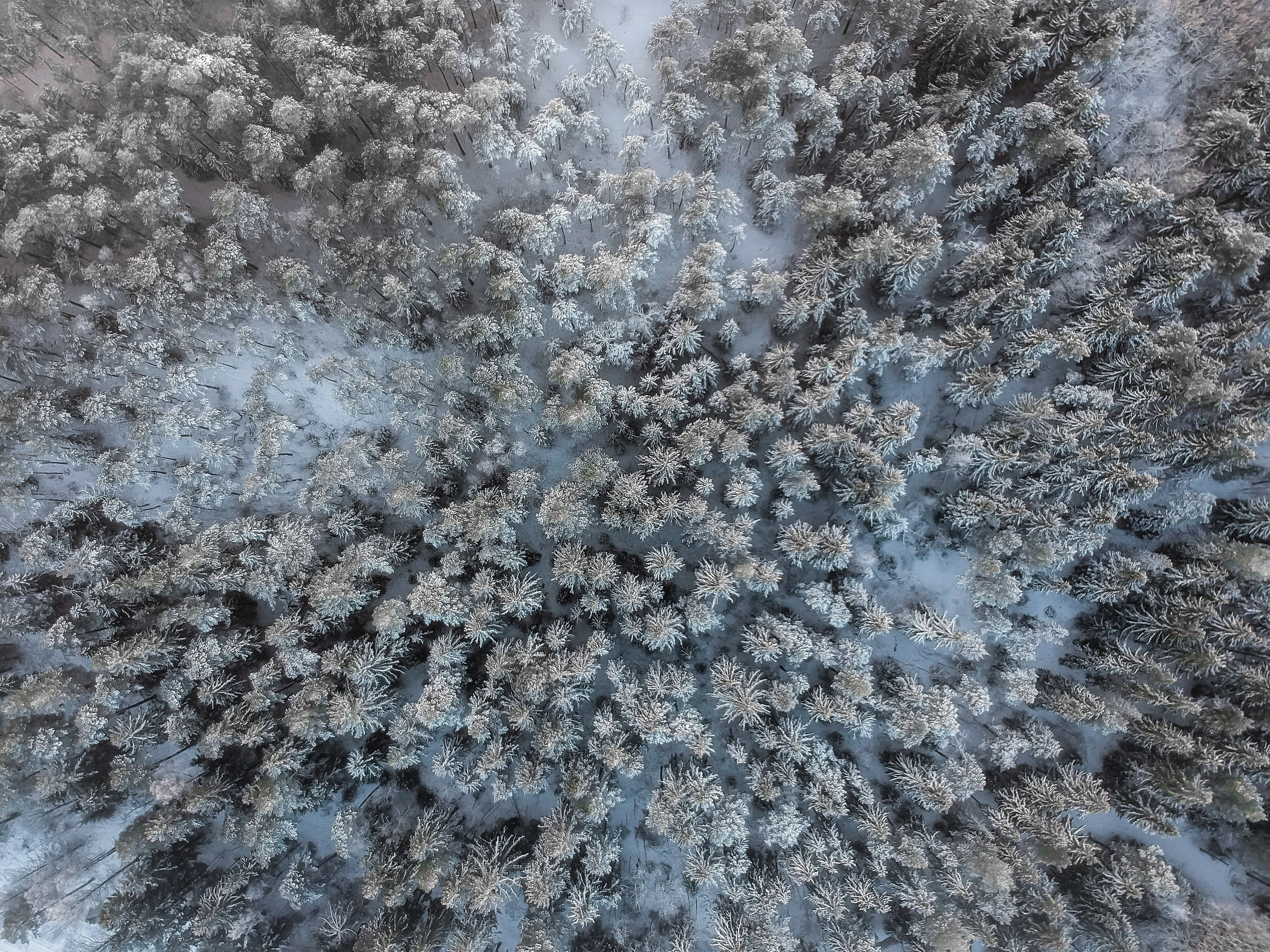bird's eye view of forest