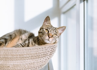 silver tabby cat on gray pillow beside clear glass window