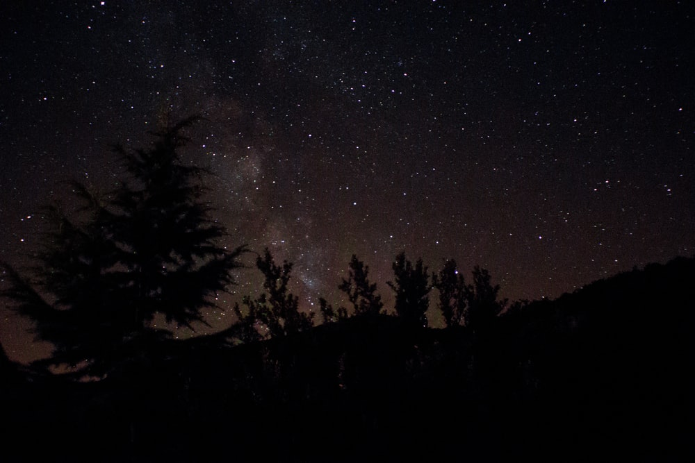 silhouette photography of pine trees during night time