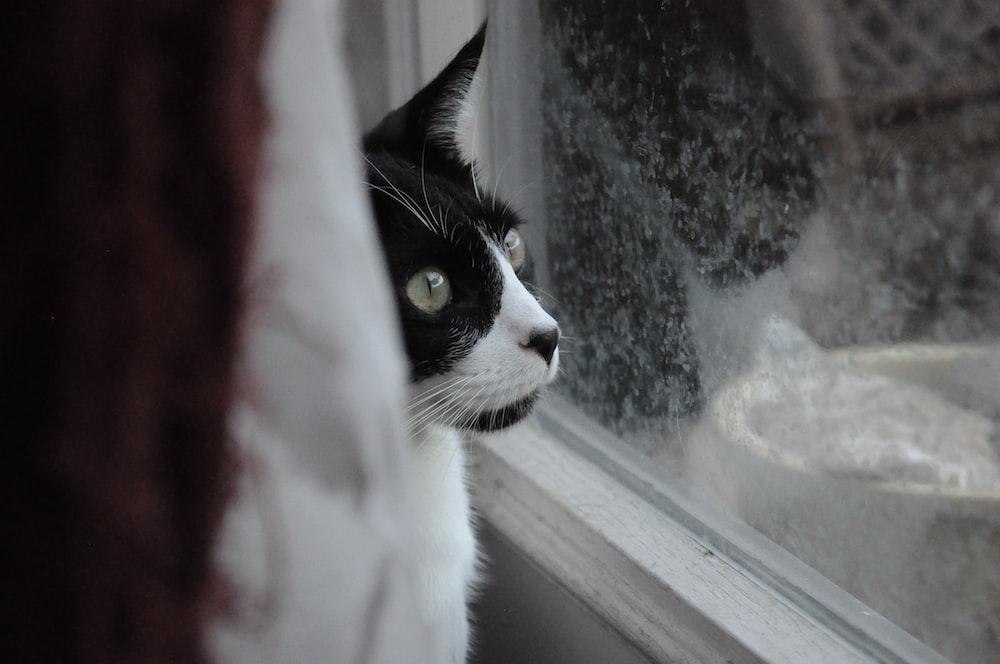 cat sitting near glass window