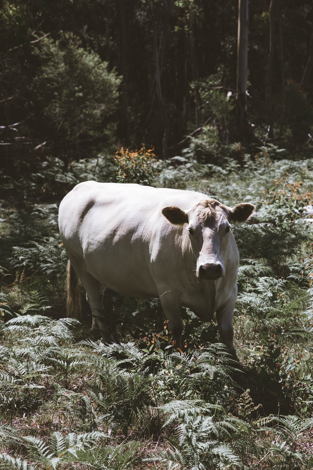 white cow on green grass field