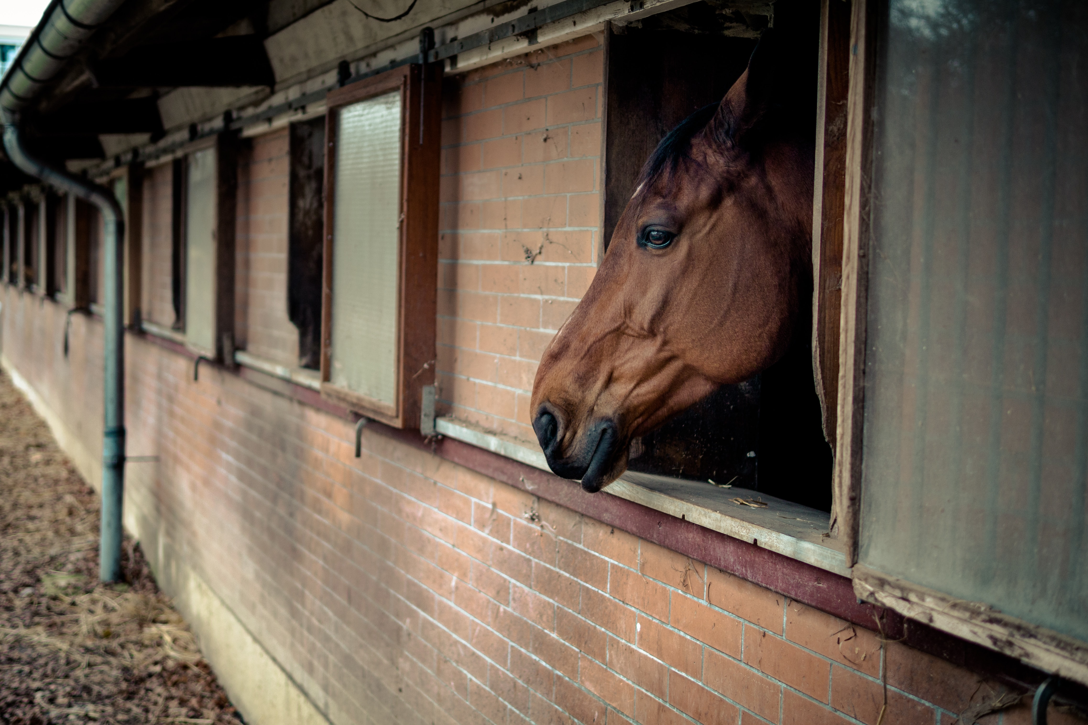 brown horse inside stable