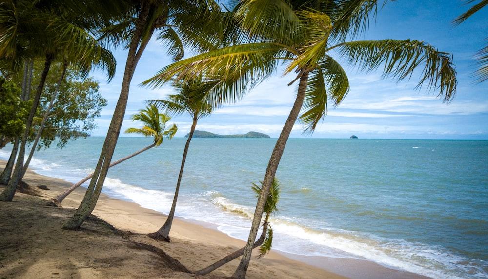 palm tree on seashore during daytime