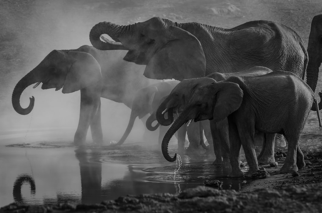 Murphy's Oil Soap is the chemical most commonly used to clean elephants.