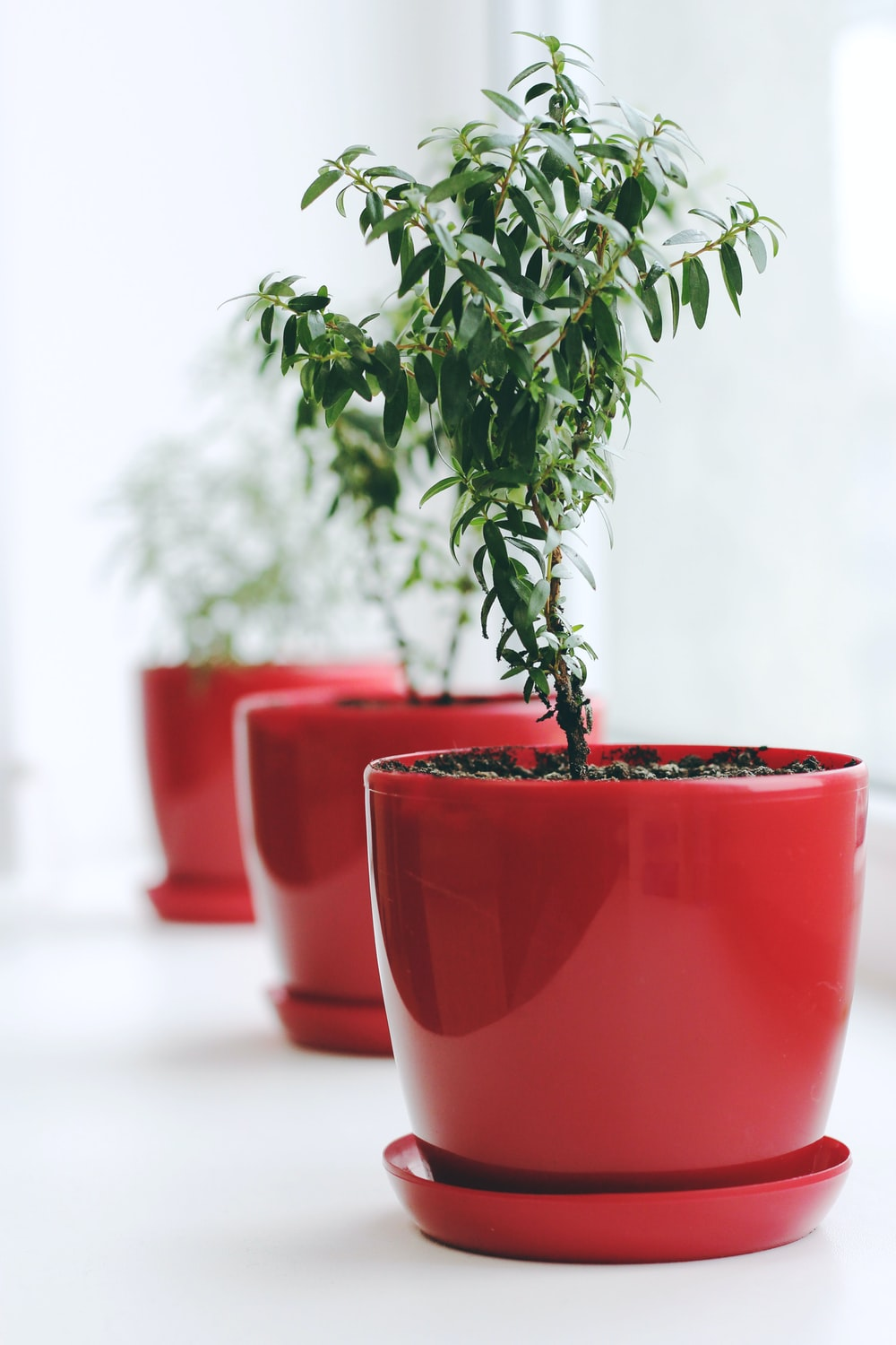 green leafed plant on red ceramic pot