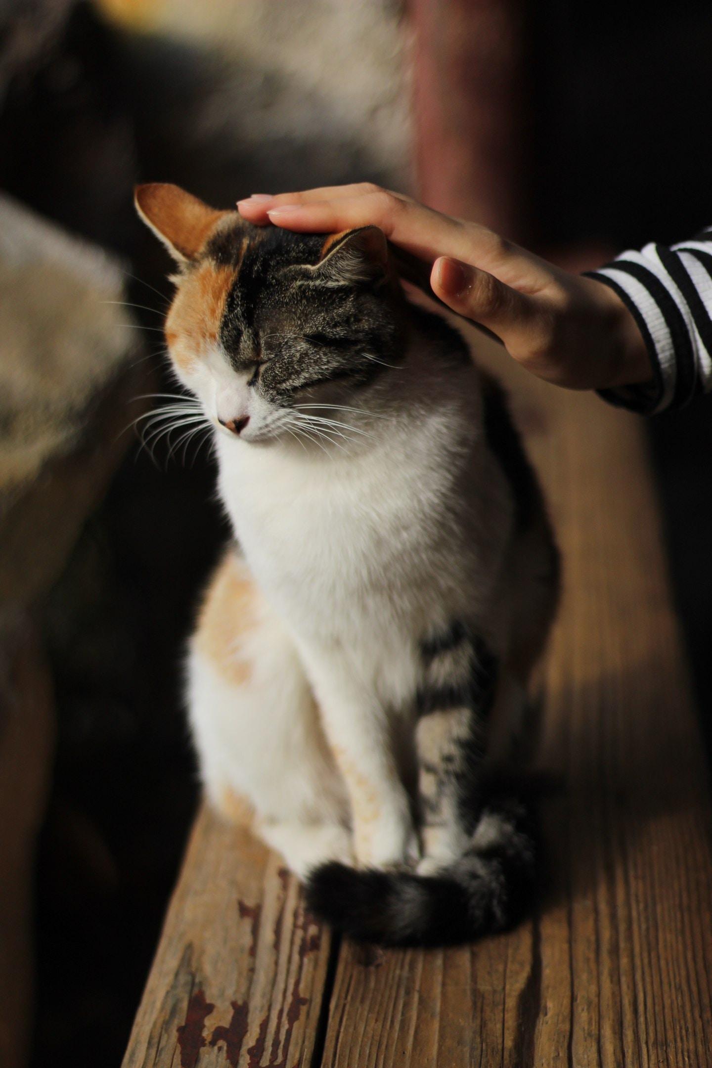 Hello Cat stories