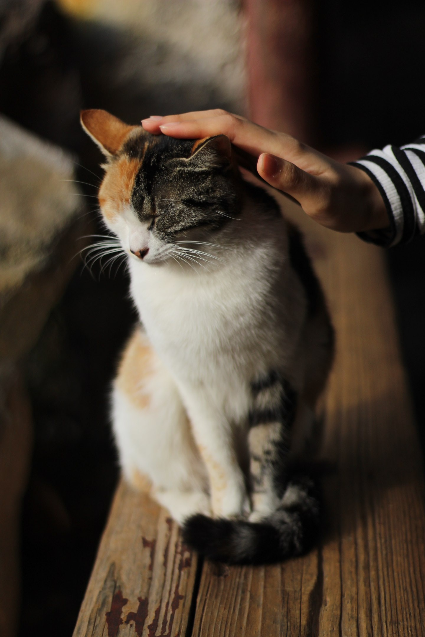person touching cat's head