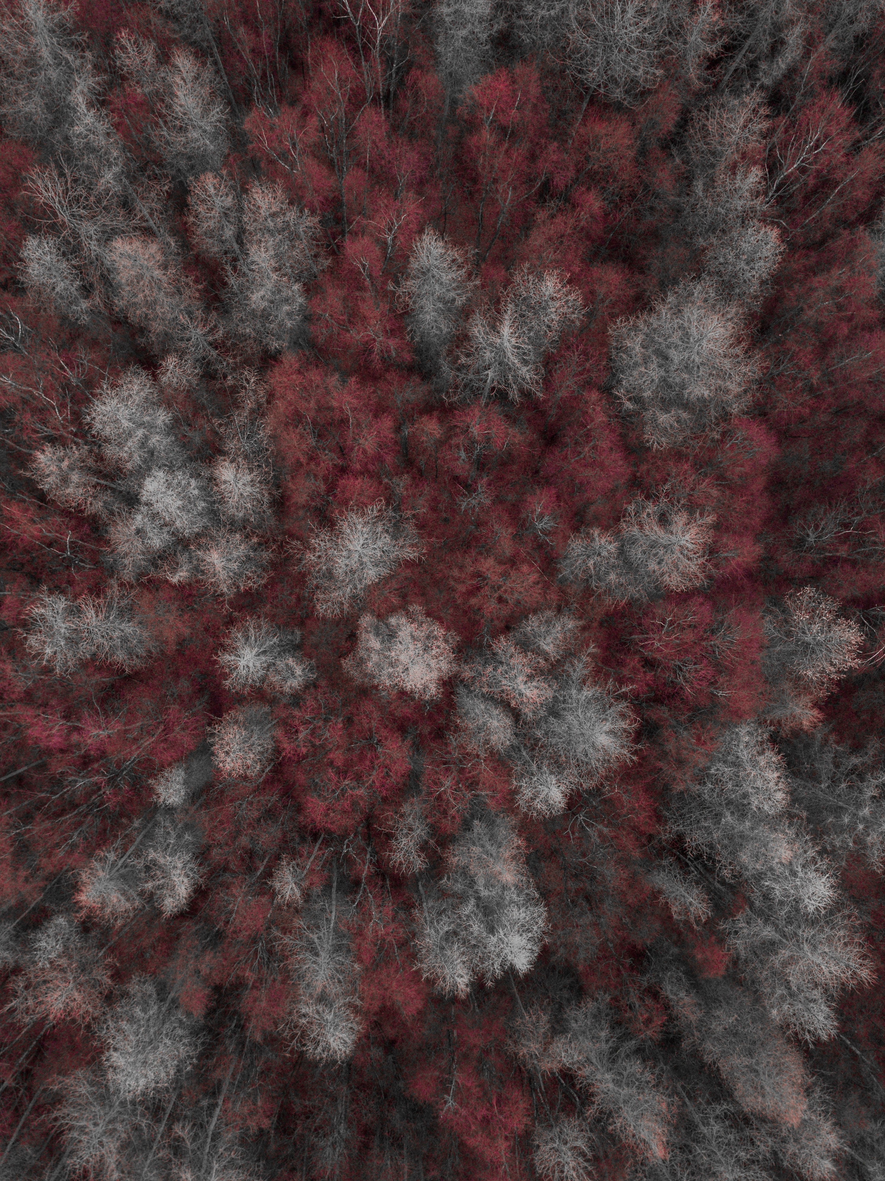 birds eye view of trees