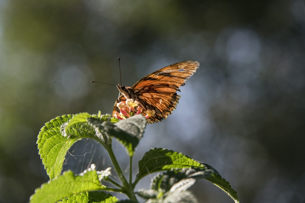 macro photography of brown butterfly