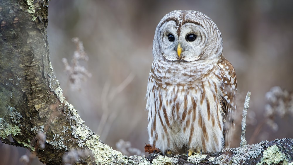 white and brown owl on tree during daytime