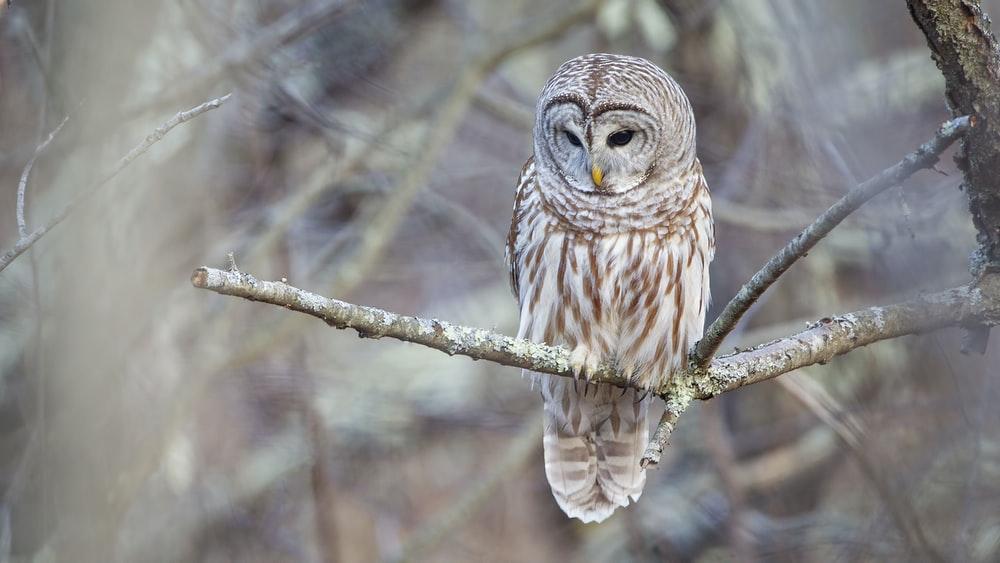 brown and white owl standing on tree branch