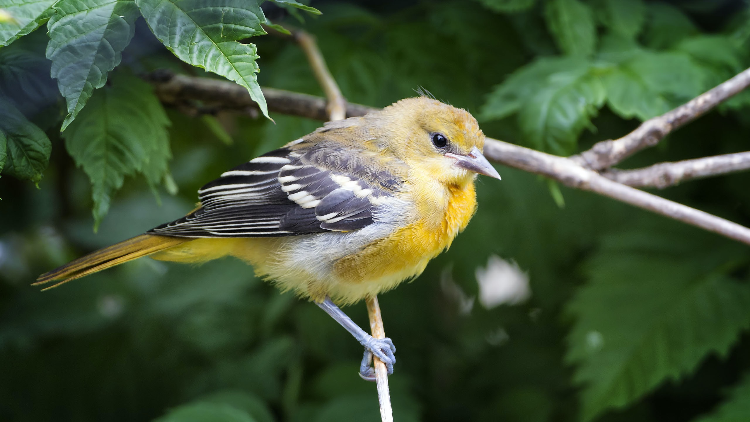 yellow and black bird on brown branch
