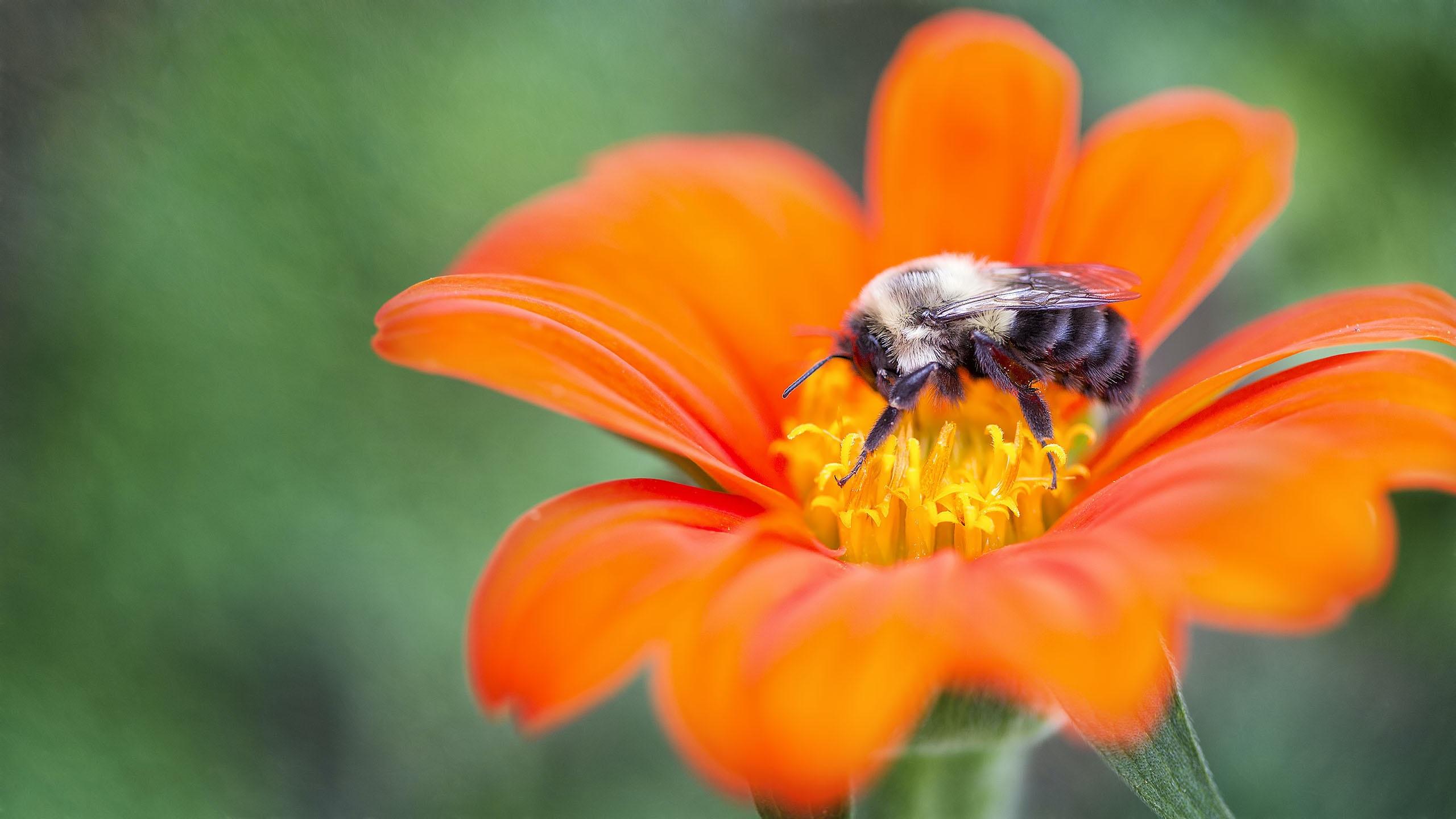 bee on orange flower