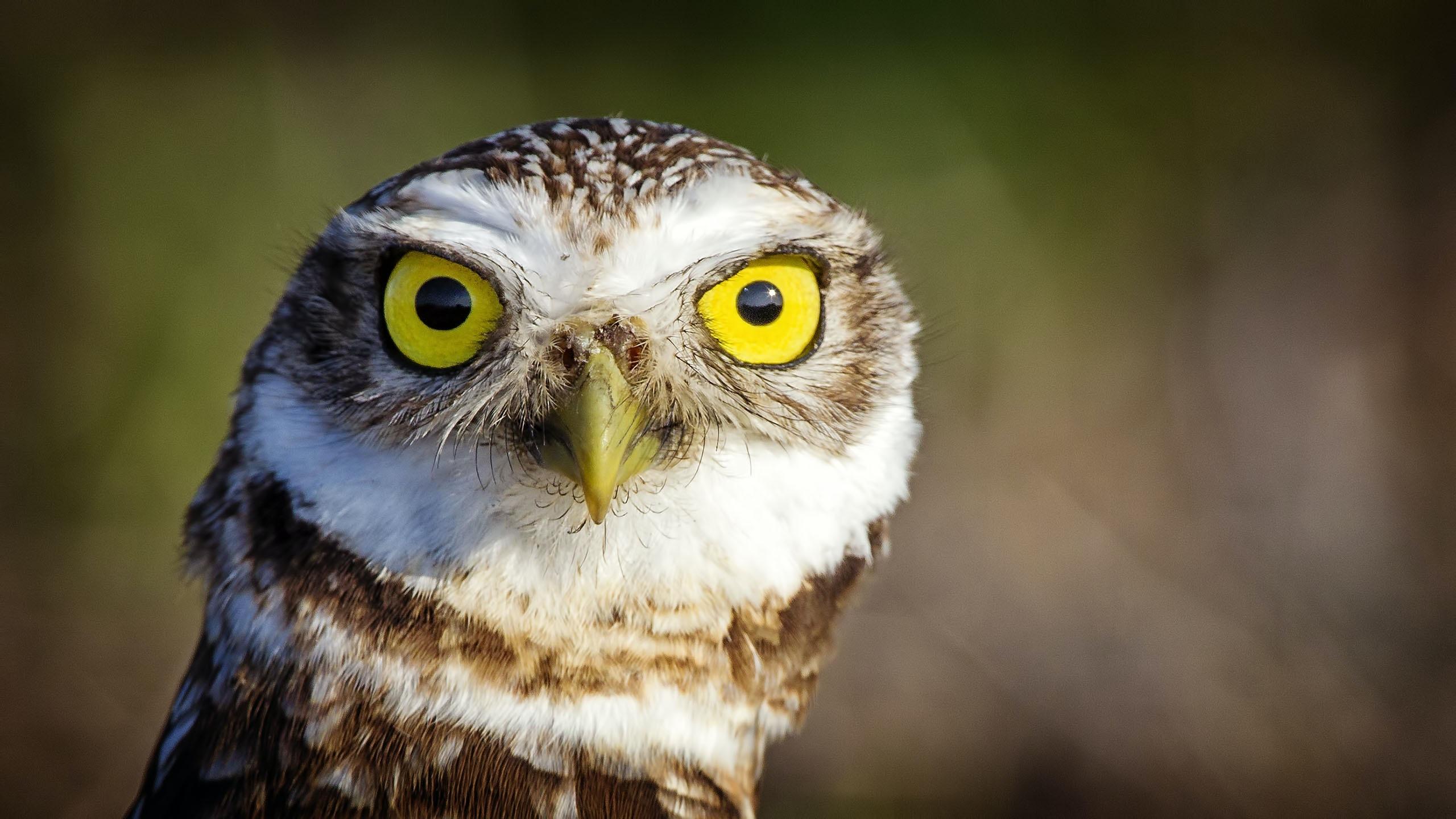 closeup photo of brown owl