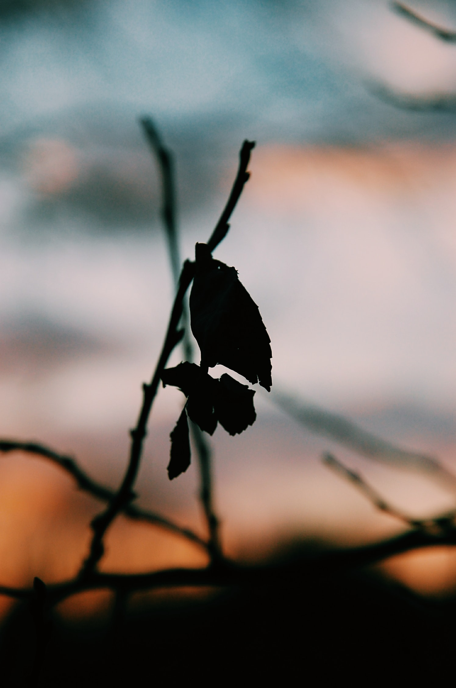 silhouette of leafed plant