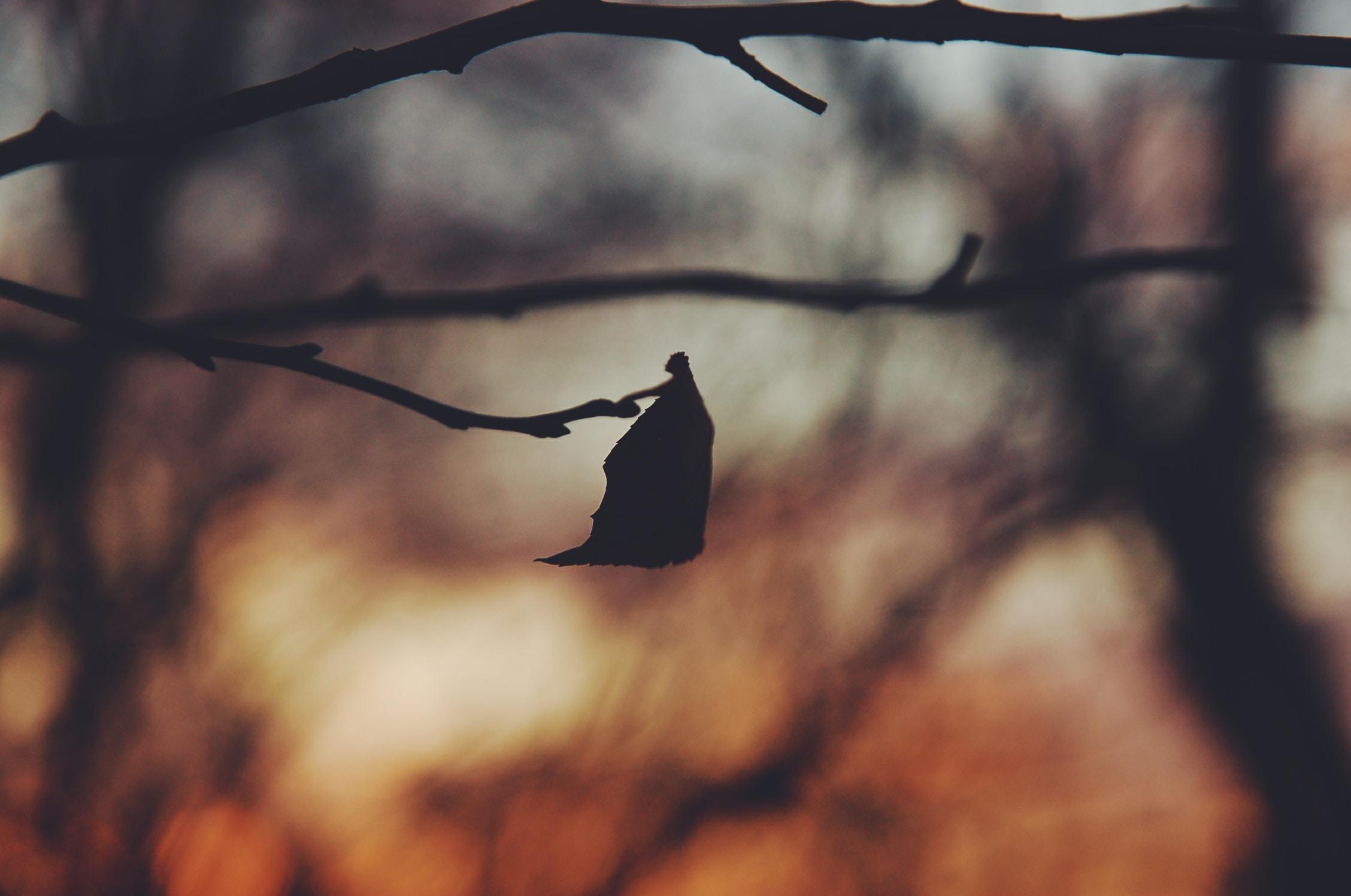 silhouette photo of tree leaf