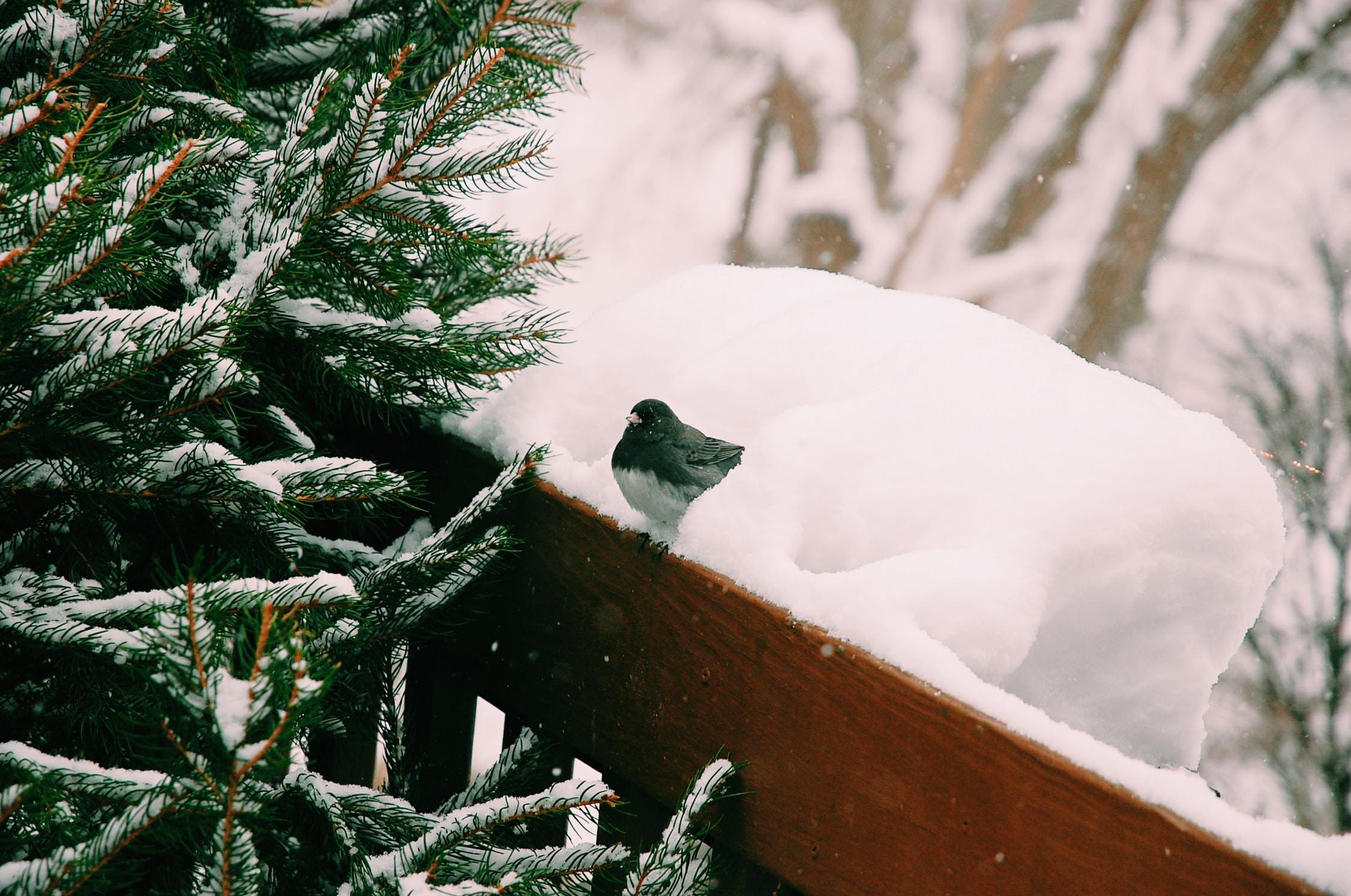 bird perching on wooden surface