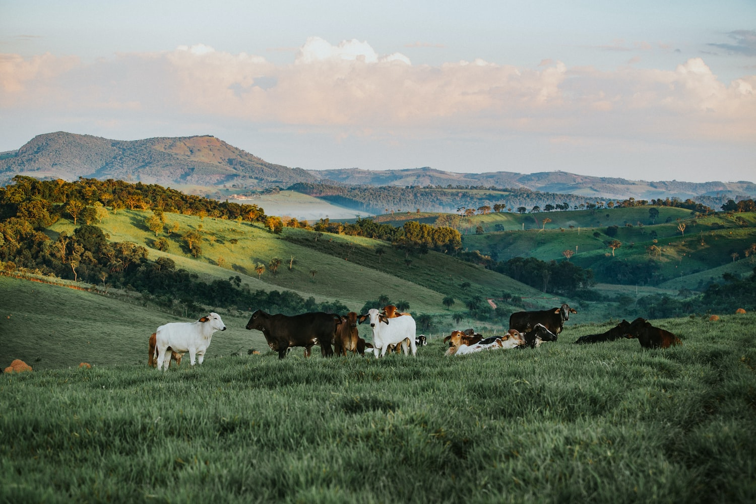 Is Grass-Fed Beef Really Better For The Planet? Here's The Science