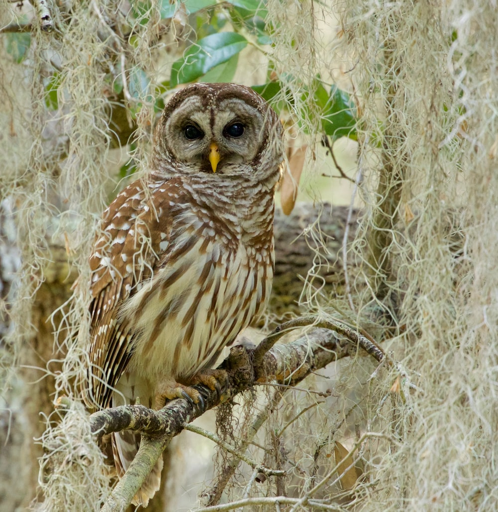 photography of owl