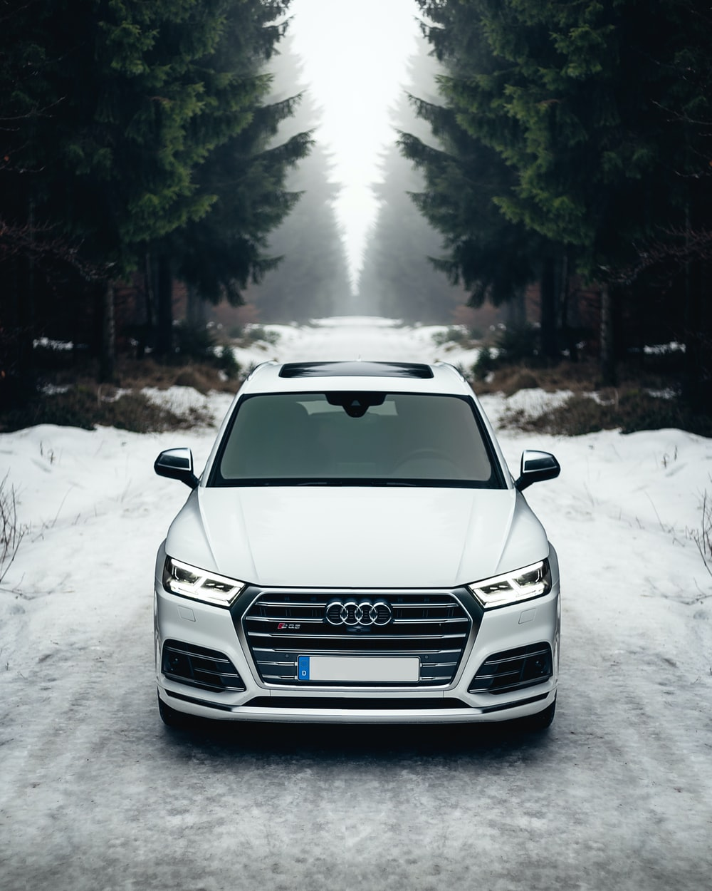 white Audi A8 on the road surrounded of trees