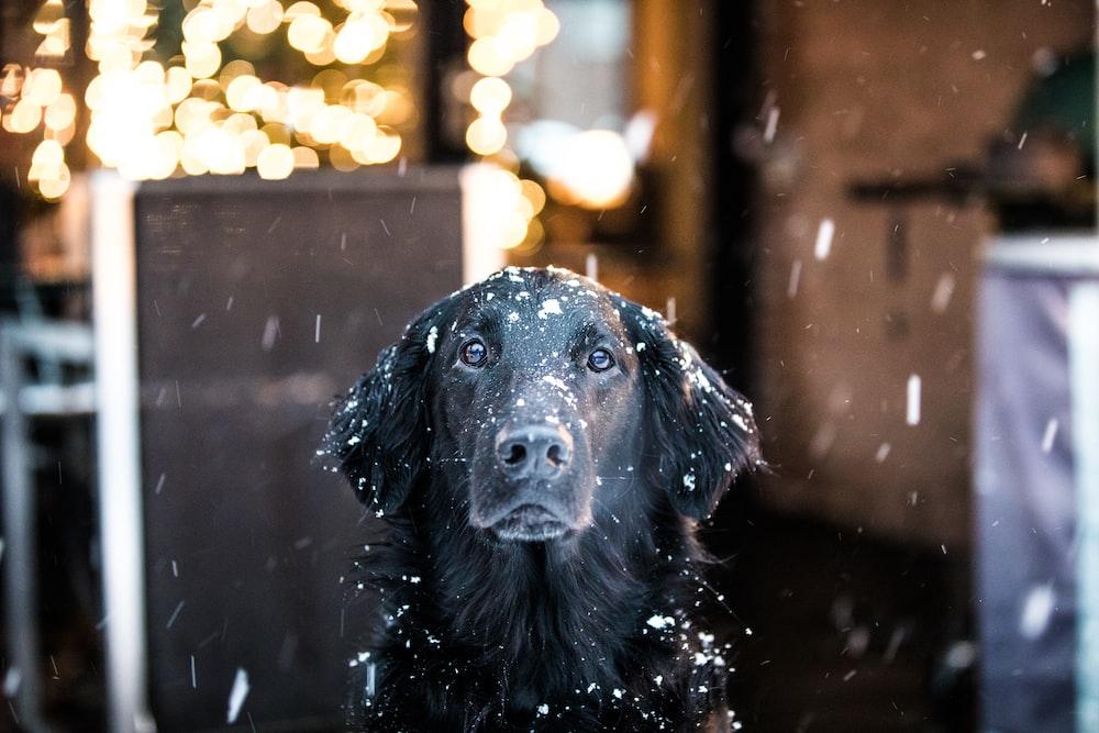 black coated dog