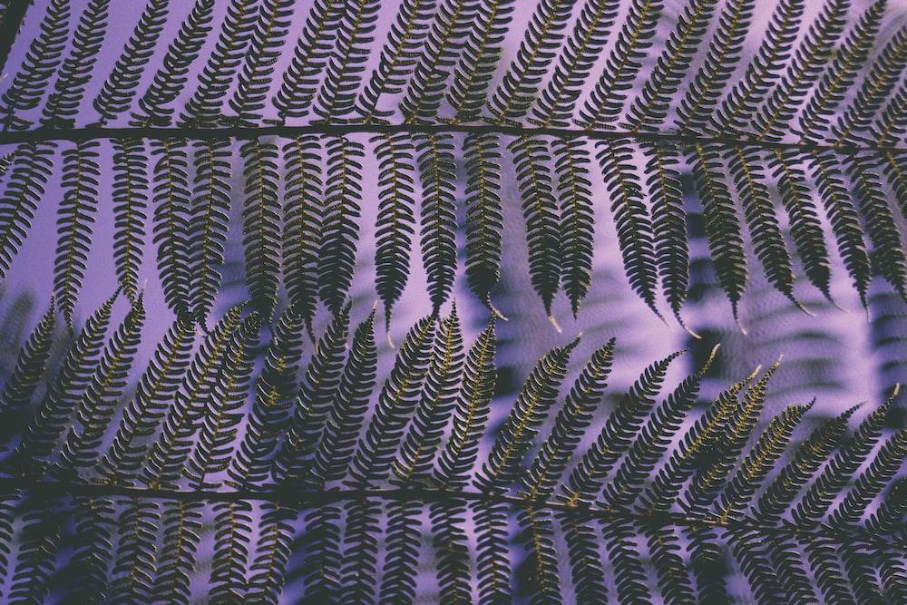 closeup photo of fern leaf