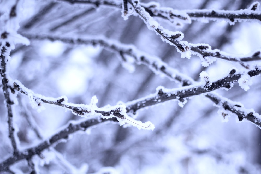 closeup photo of frosted branch