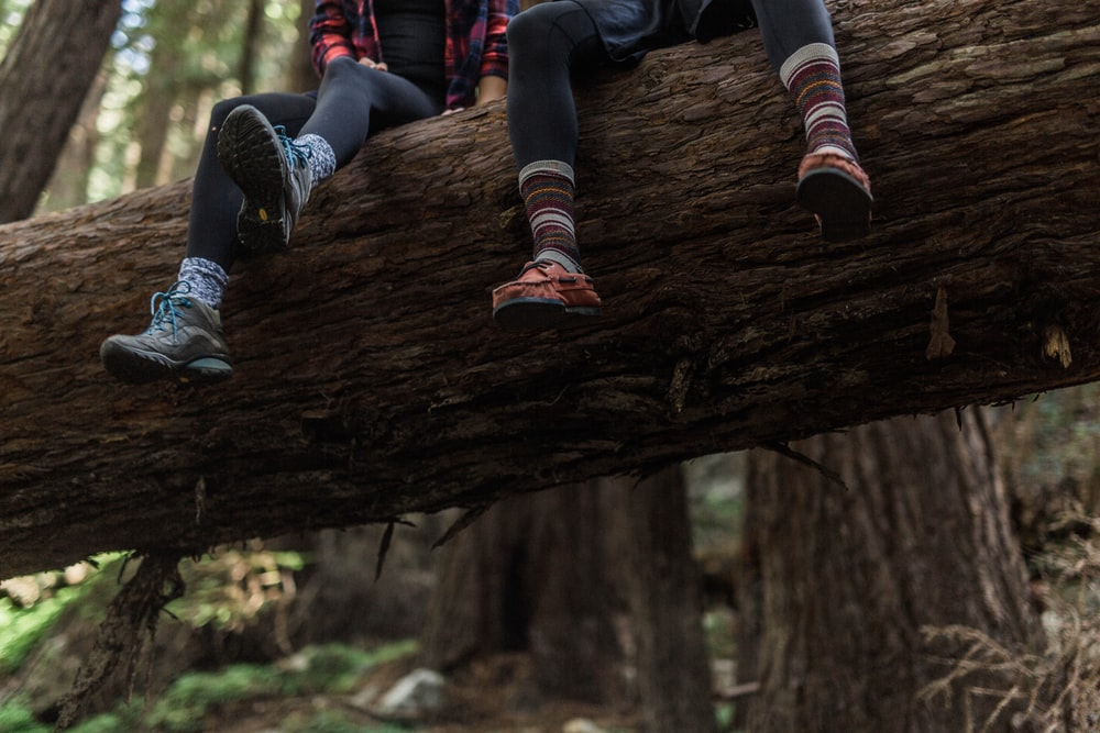 two person sitting on brown tree trunk