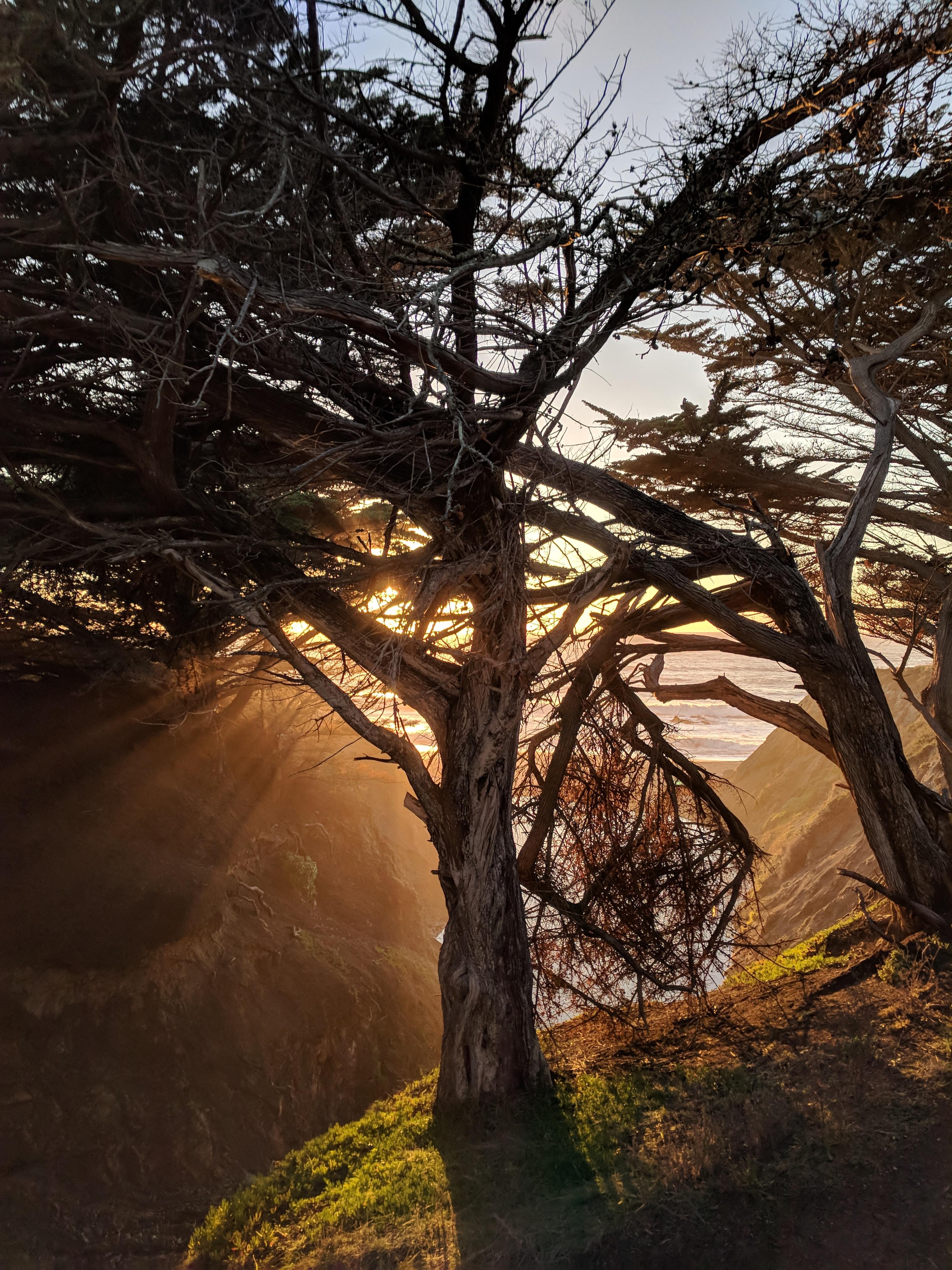 green trees at dawn