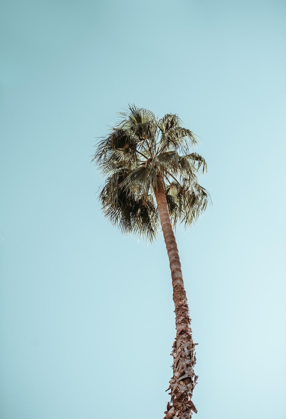 photograph of palm tree