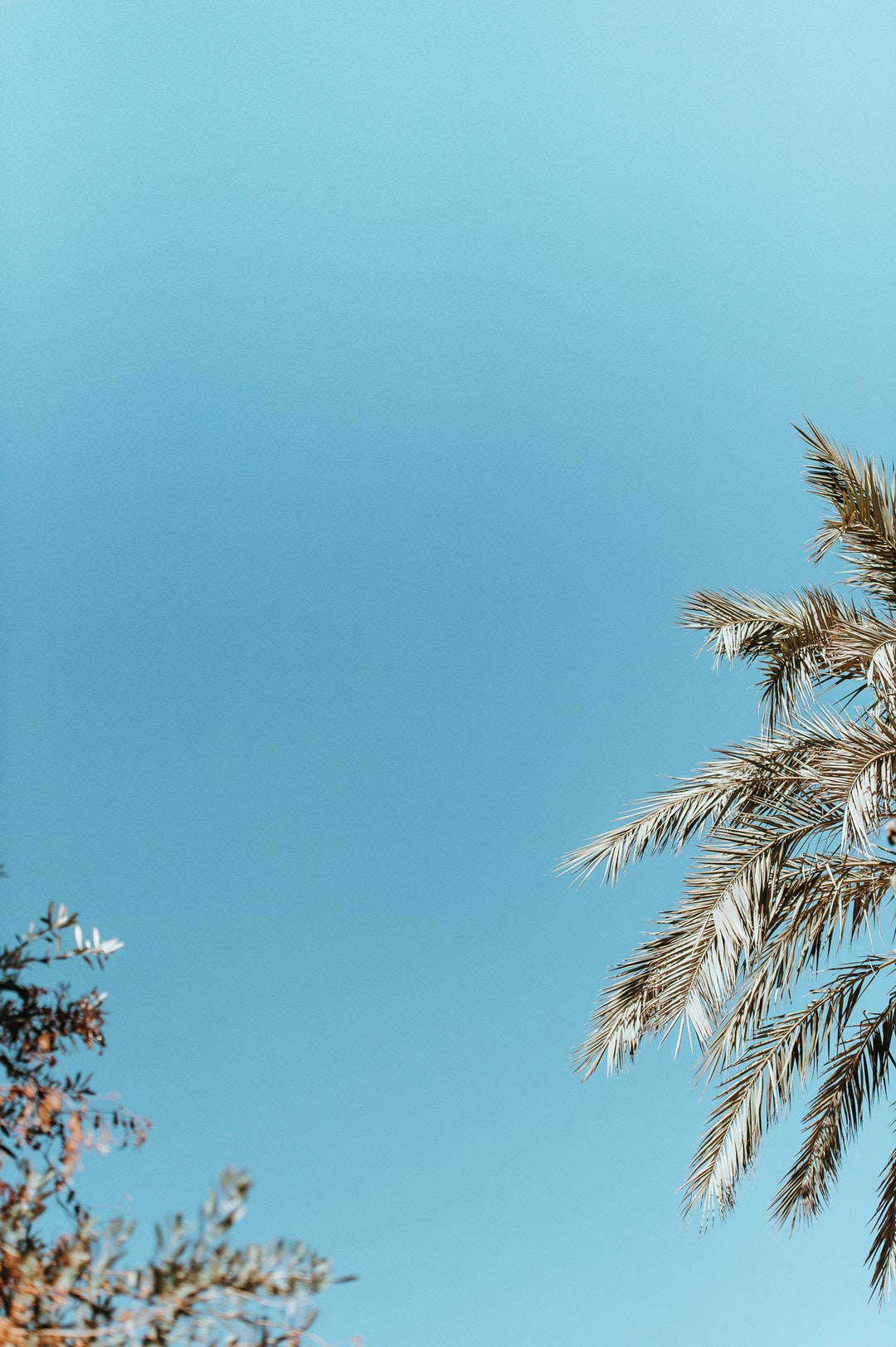 Blue sky, palm tree,blank space