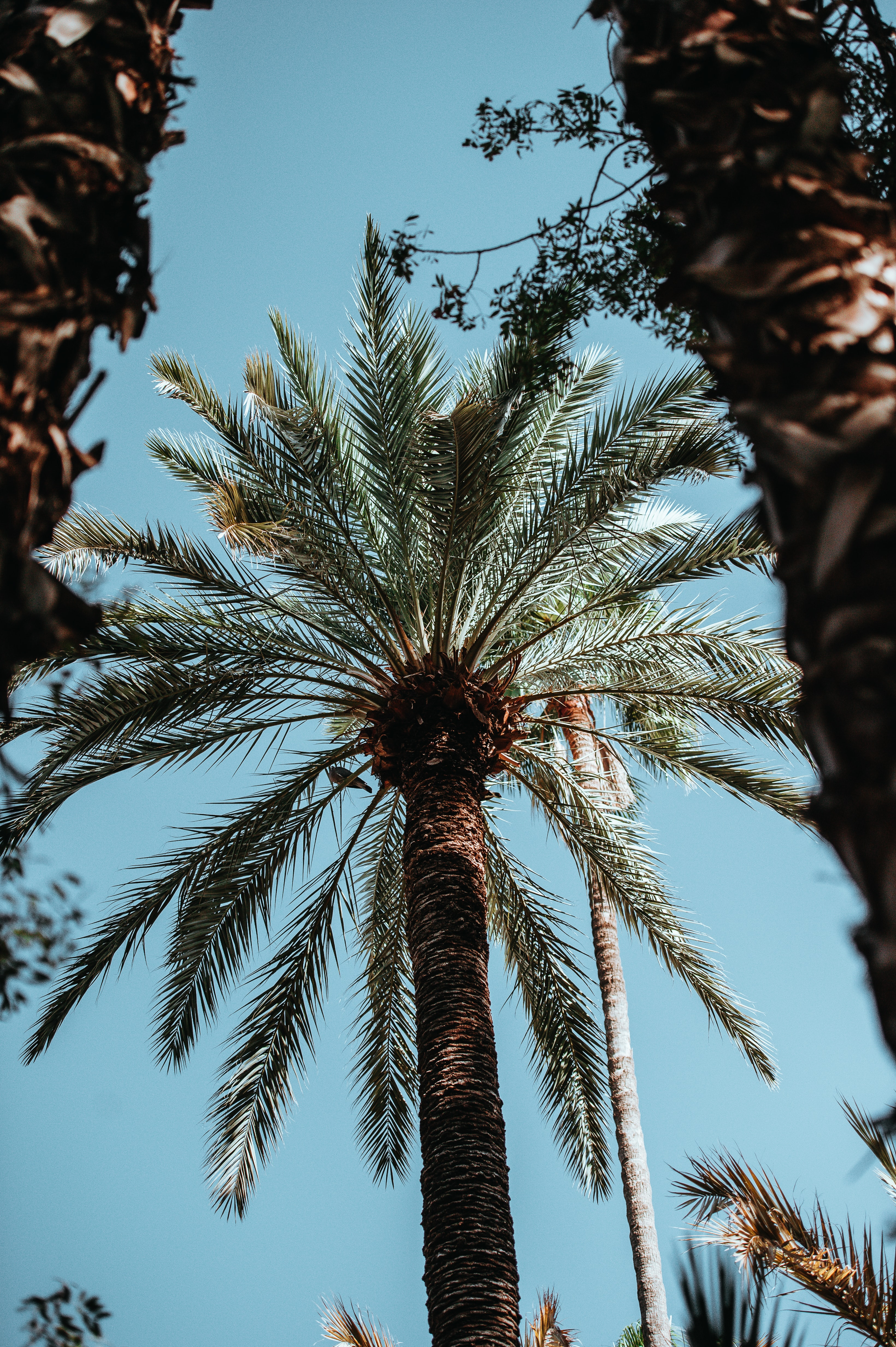 low-angle view of green palm tree