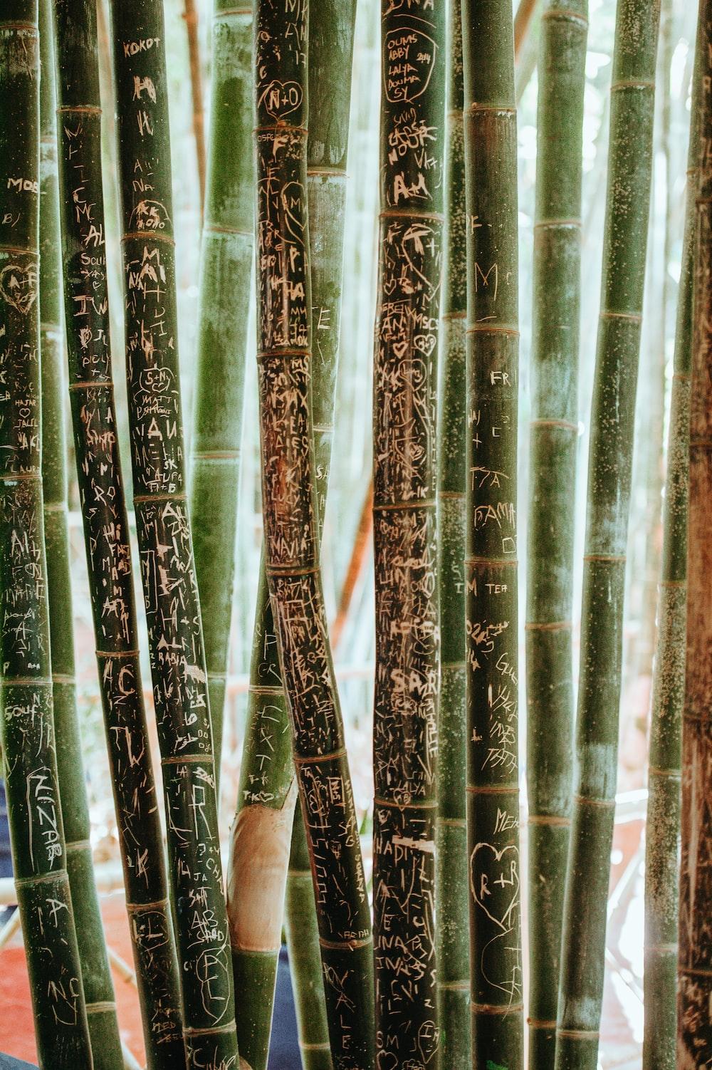 shallow focus photography of green bamboo sticks
