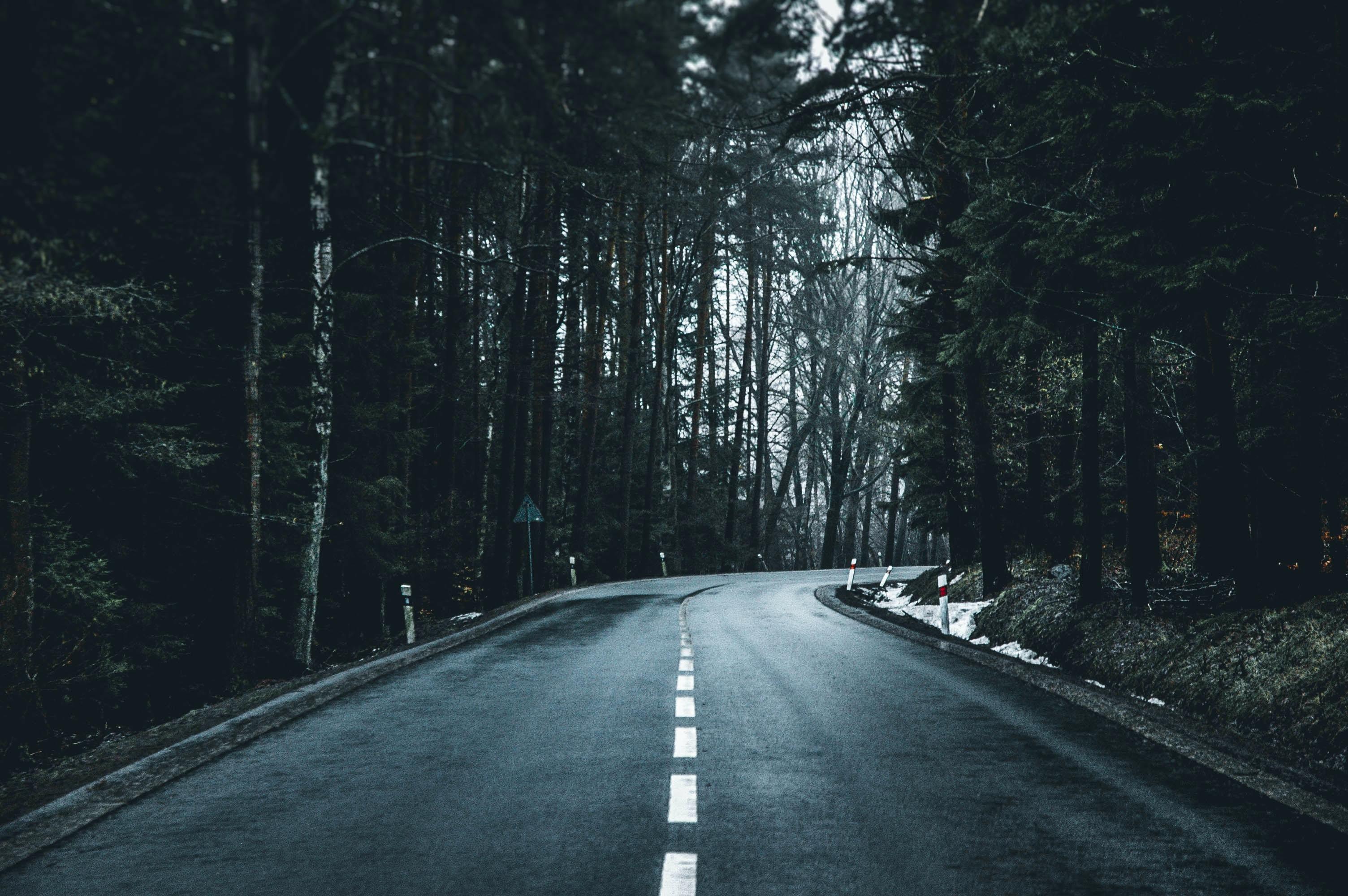asphalt road in between green leafed trees