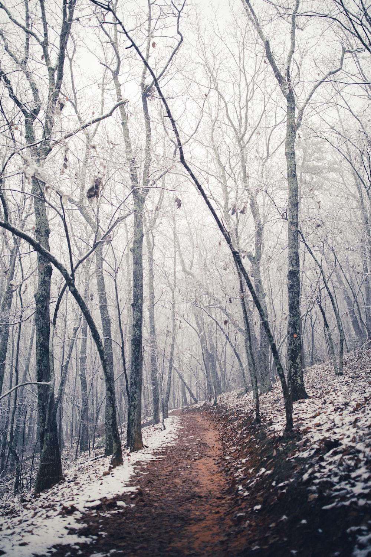 brown road between trees