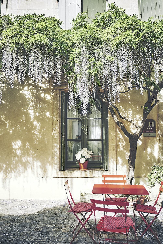 dining set under tree
